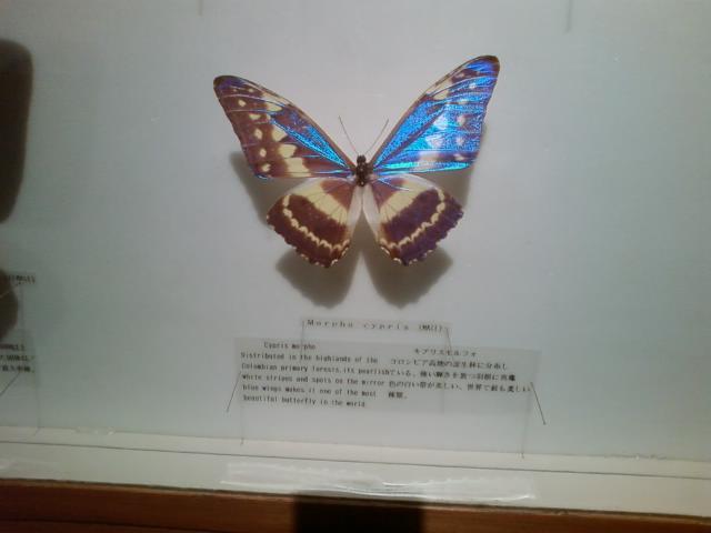 p-0469.jpg
